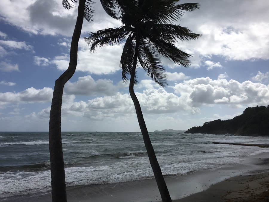Martinique 291