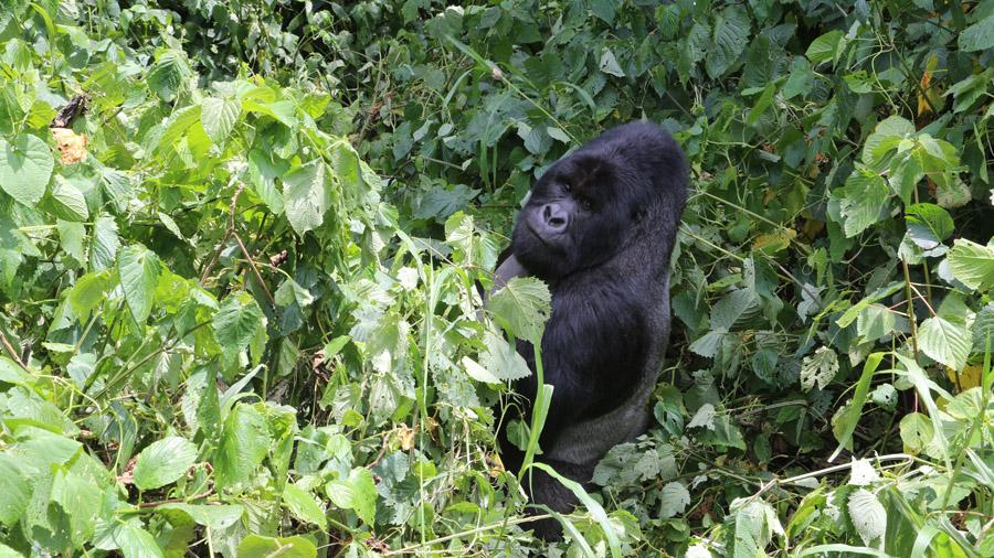 Congo 277