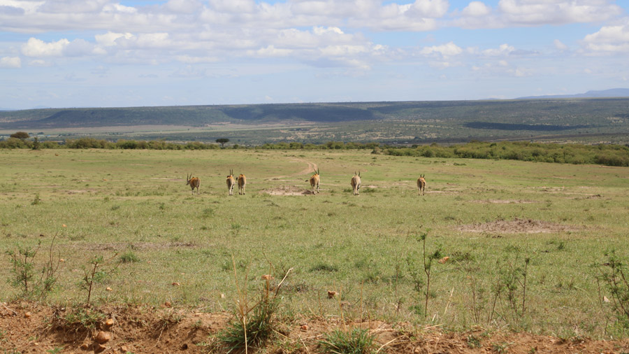 Kenya 625
