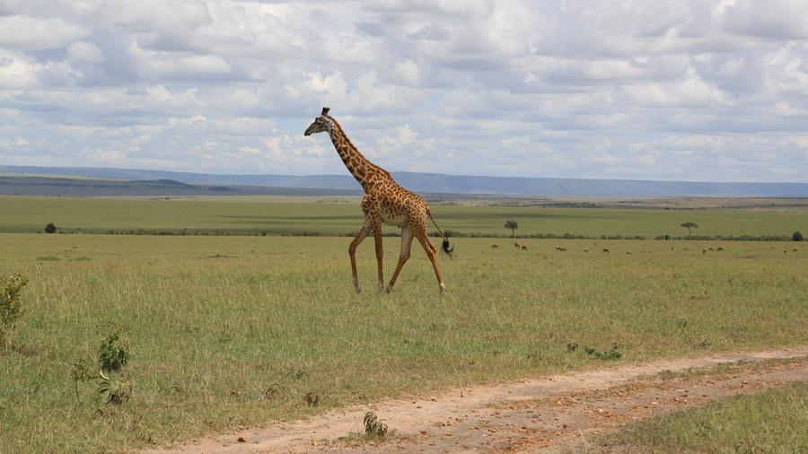 Kenya 663