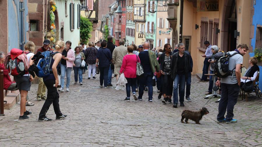 501 France Alsace