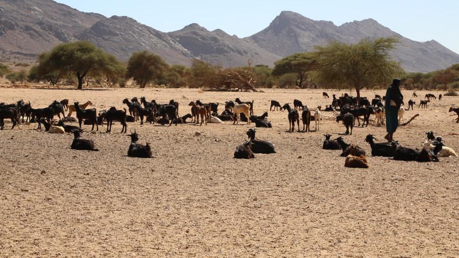 Algerie Desert du Sahara Bergere
