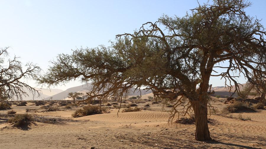 Namibie Desert de Namib