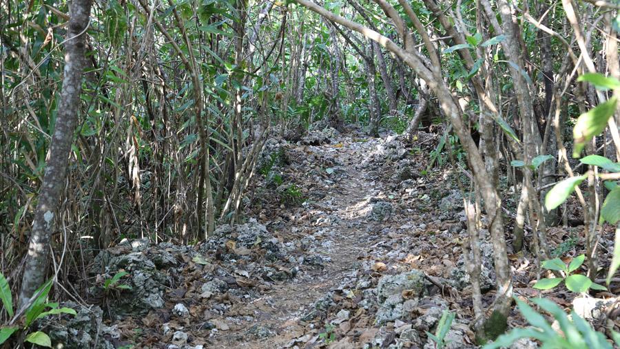 Niue 127