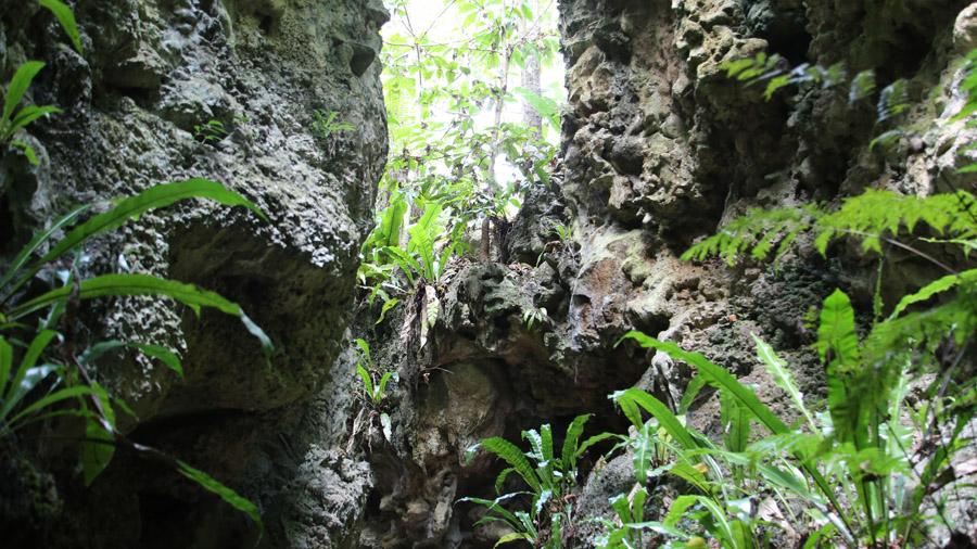 Niue 313