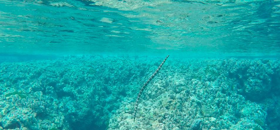 Niue 444