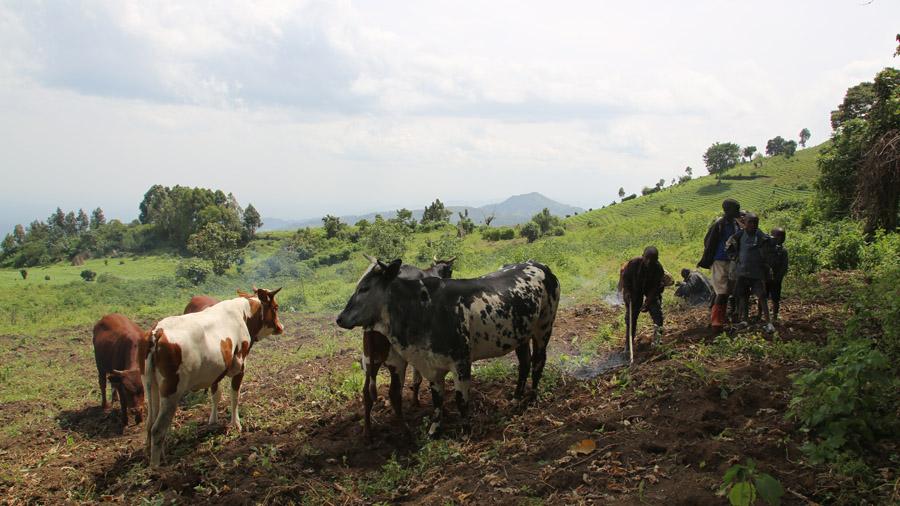 RDC Fermiers