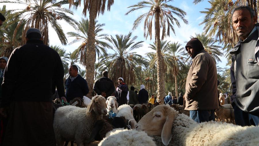 115 Tunisie Sud