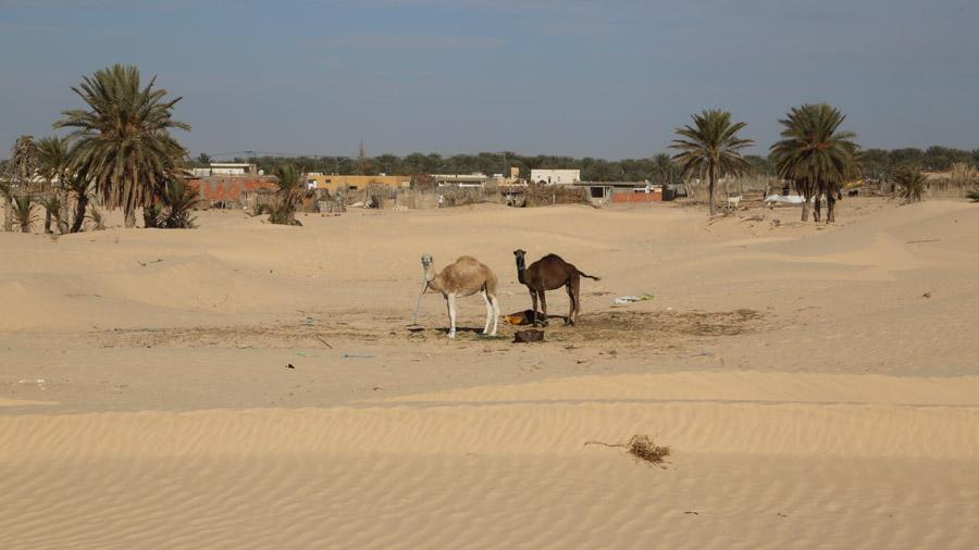 311 Tunisie Sud