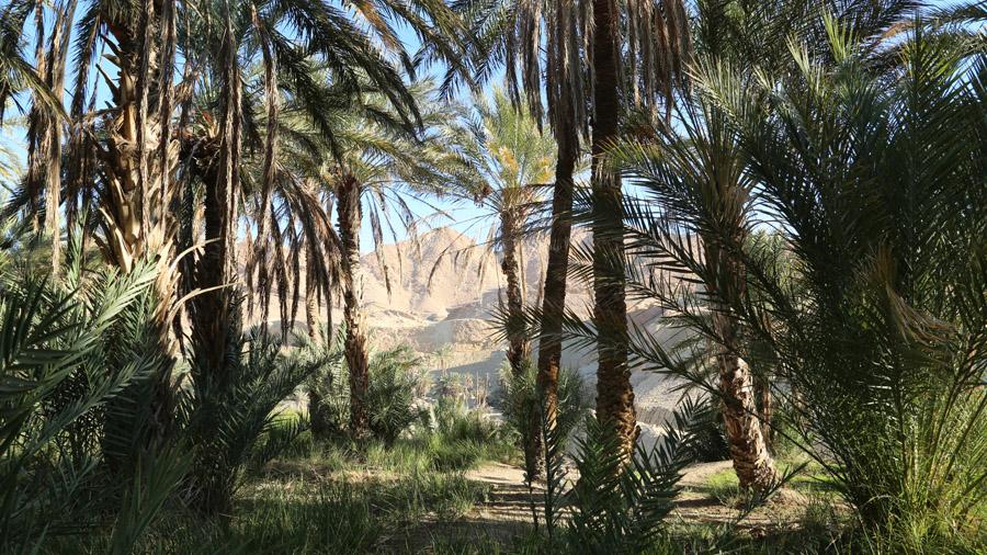 Imagini pentru Tunisie exotique