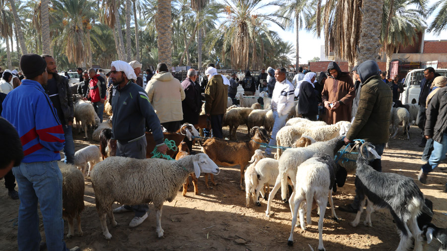 97 Tunisie Sud