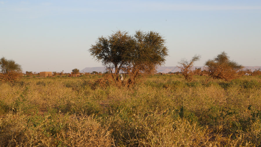 107 Mauritanie