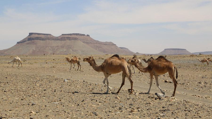 311 Mauritanie