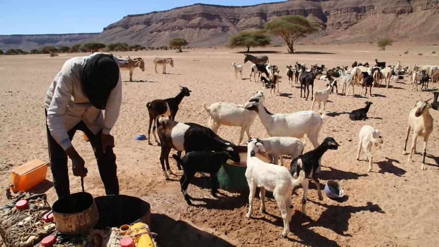 449 Mauritanie