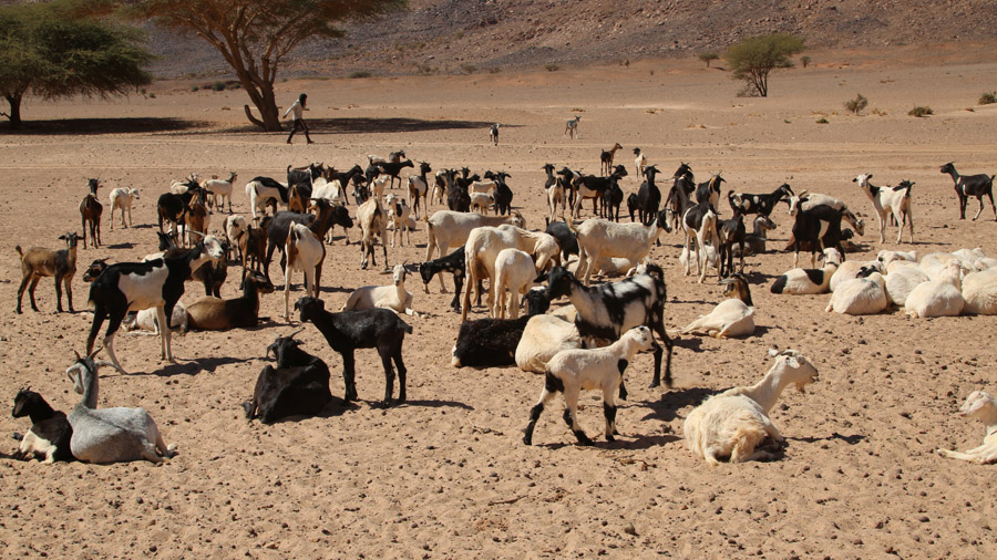 458 Mauritanie