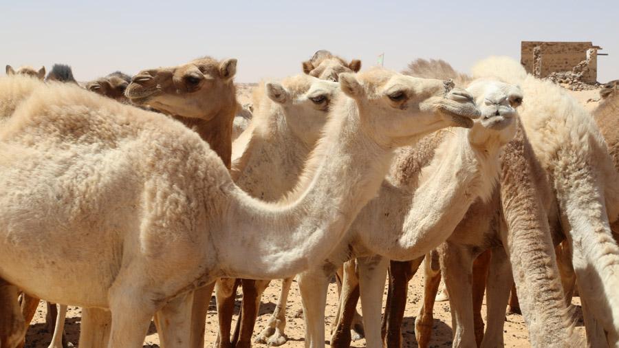 869 Mauritanie