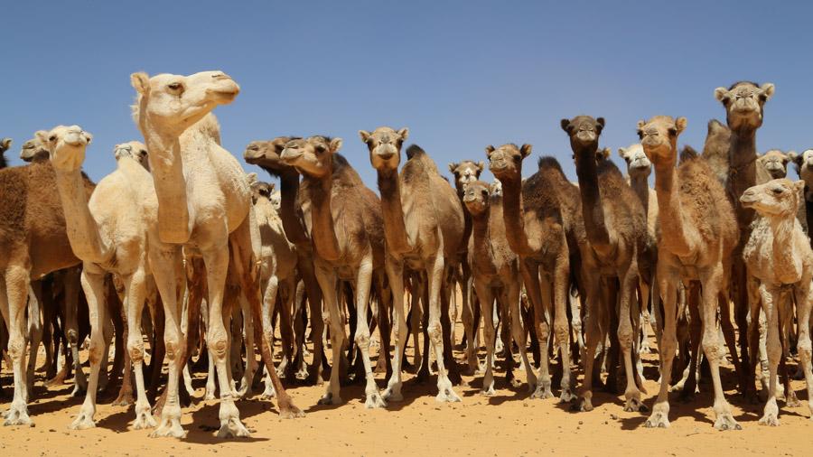 875 Mauritanie