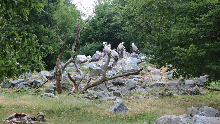 99 France Parc Sainte-Croix