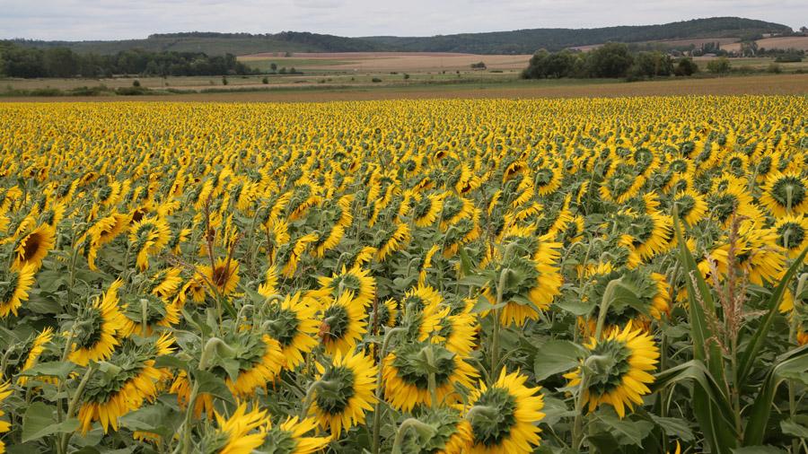 277 France Pays du Saulnois Jours 2 et 3