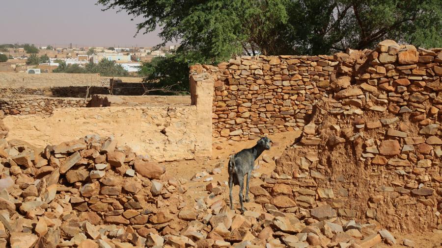 242 Mauritanie