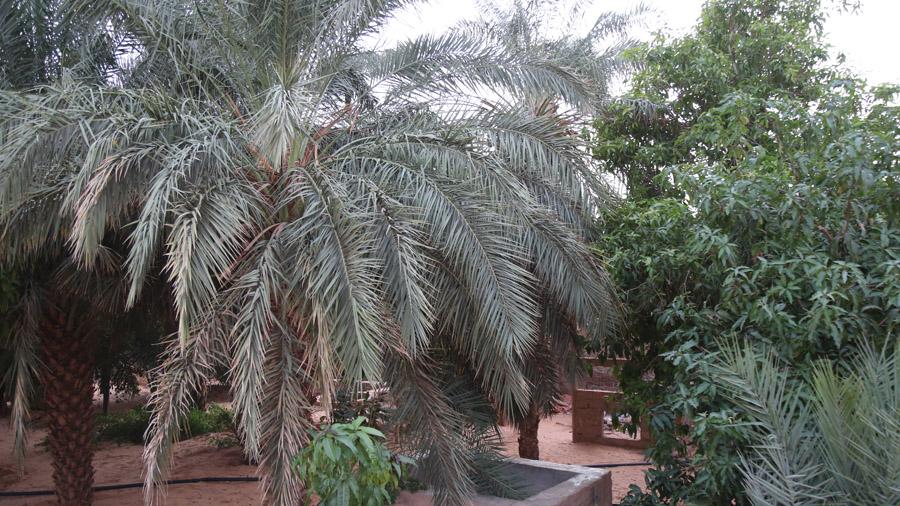 435 Mauritanie