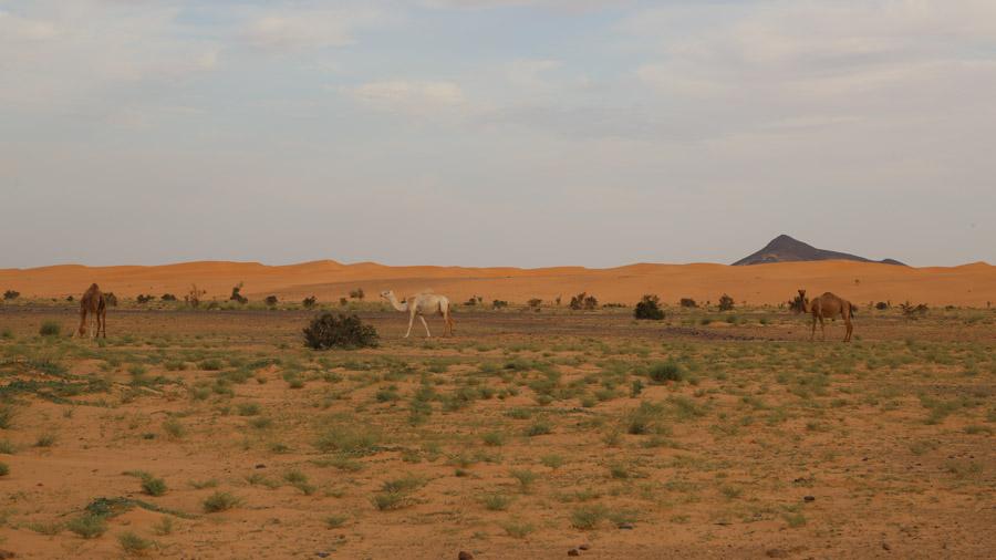 736 Mauritanie