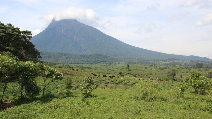 RDC Paysage