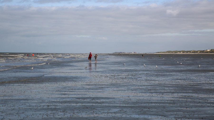 219 France Somme Baie de Somme